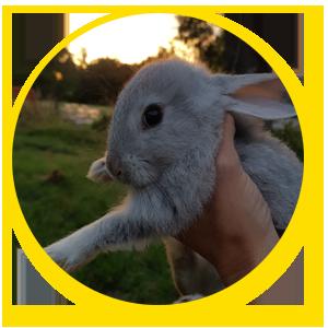 les lapins a la ferme - domaine d ecoline a sadirac
