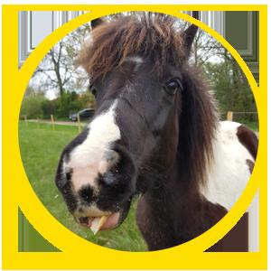 les poneys à la ferme - domaine d ecoline a sadirac