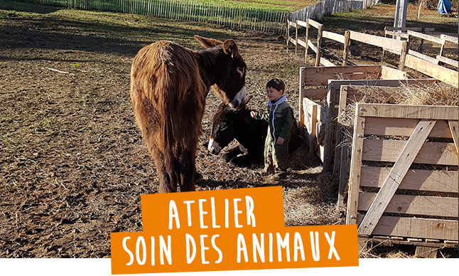 atelier immersion les animaux de la ferme