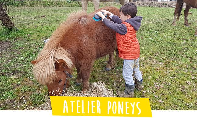 atelier immersion pour enfants s occuper des poneys
