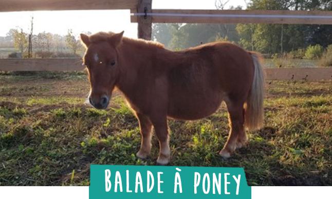 balade a poney pour les enfants sur le domaine sadirac bordeaux