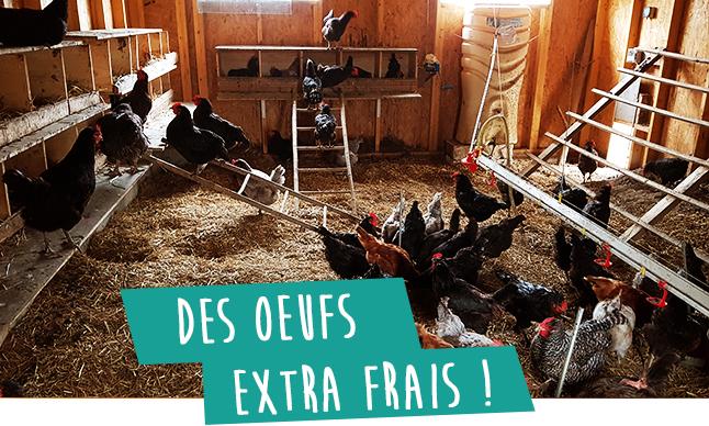 Des oeufs extra frais de nos poules domaine ecoline sadirac