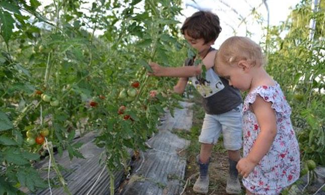 les enfants decouvrent la cueillette et comment poussent les fruits et legumes
