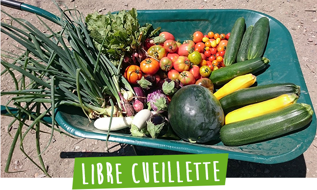 Libre cueillette de fruits et legumes a sadirac en gironde